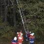 Tierrettung vom Baum