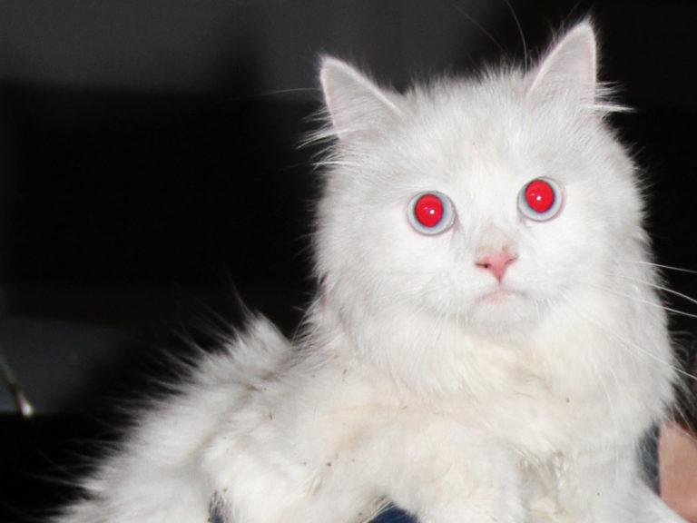 Katze aus PKW gerettet!